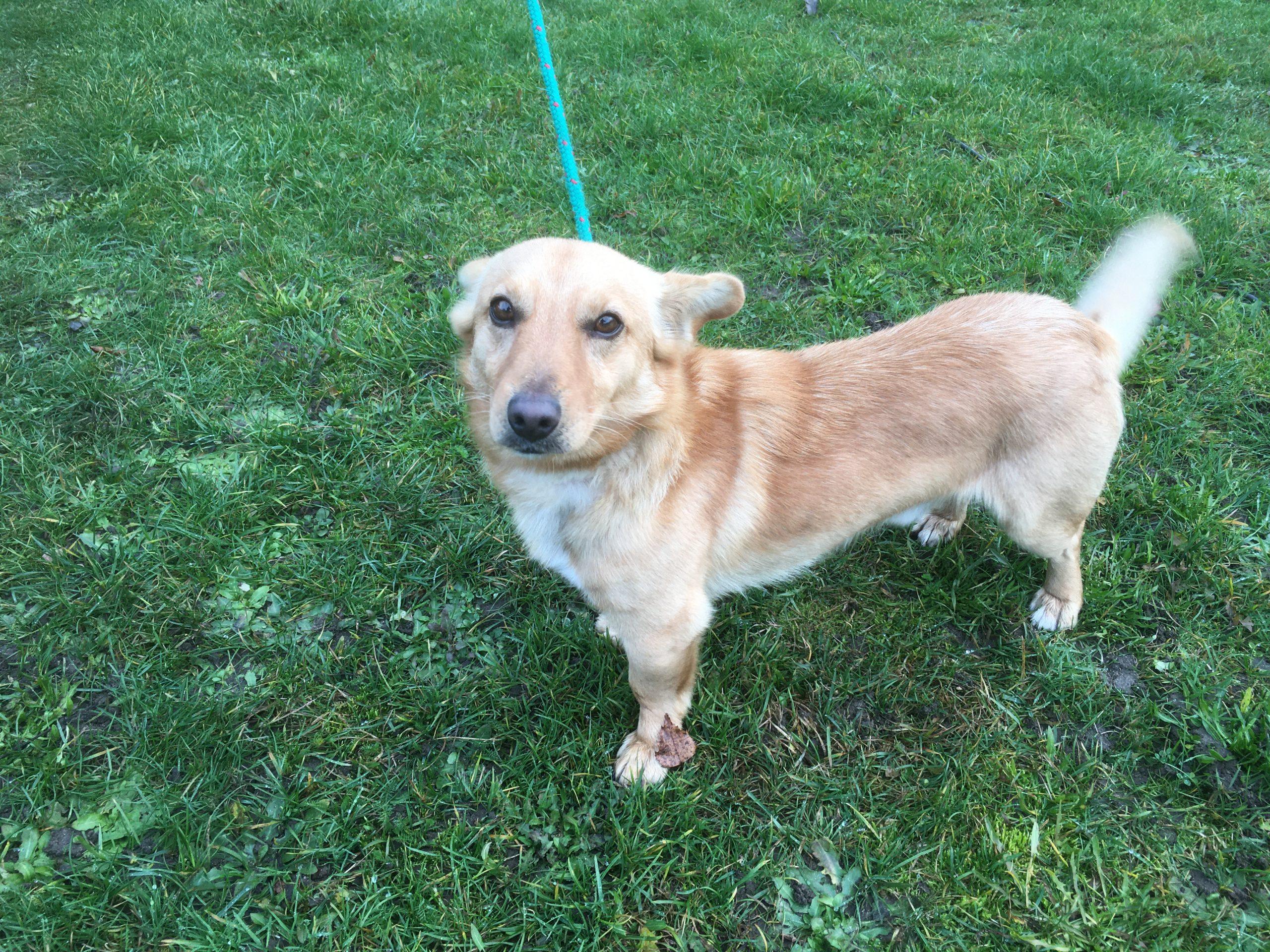 Szukamy właściciela lub nowego opiekuna dla psa